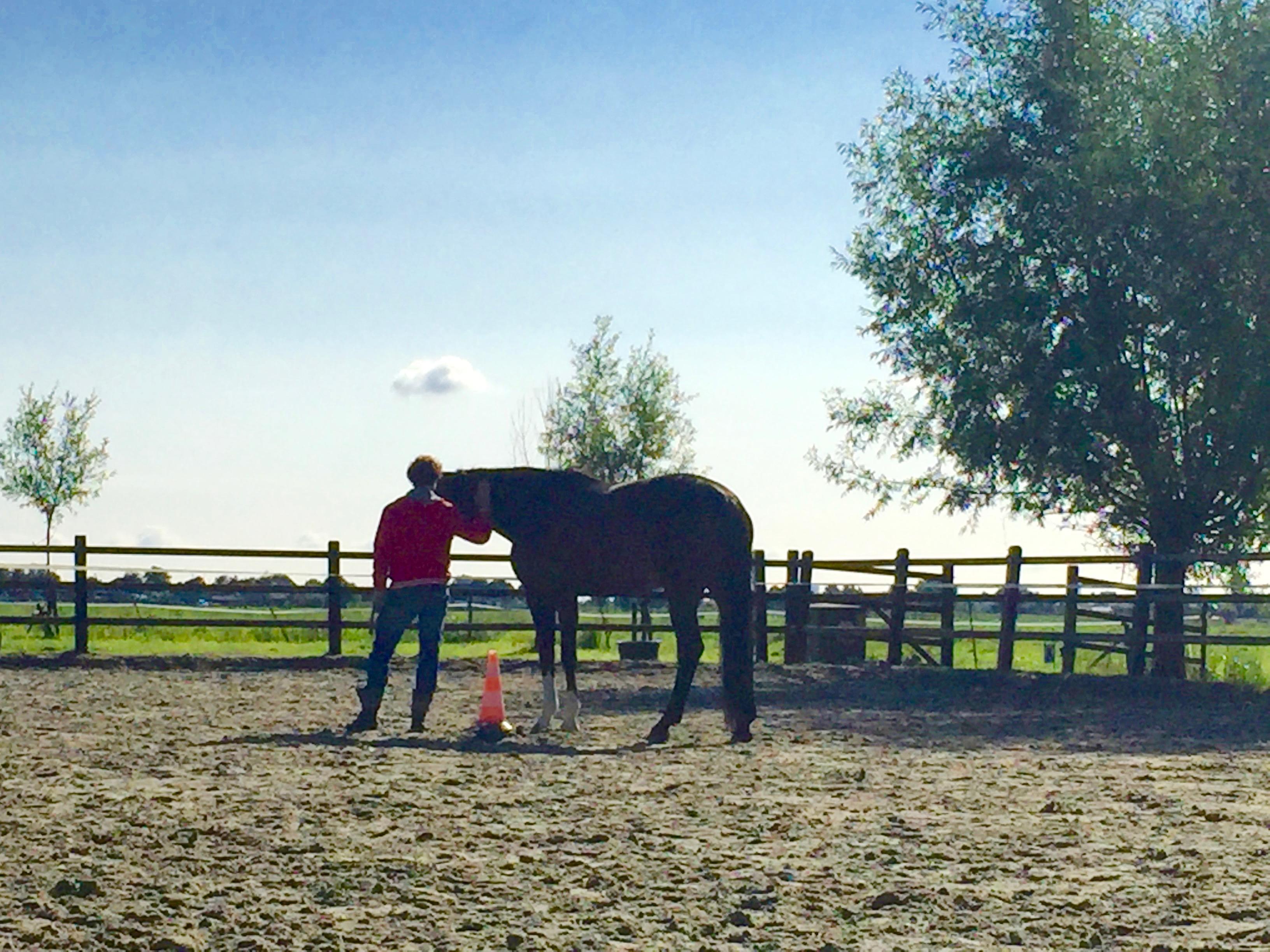 paardencoaching Rotterdam en Zeeland